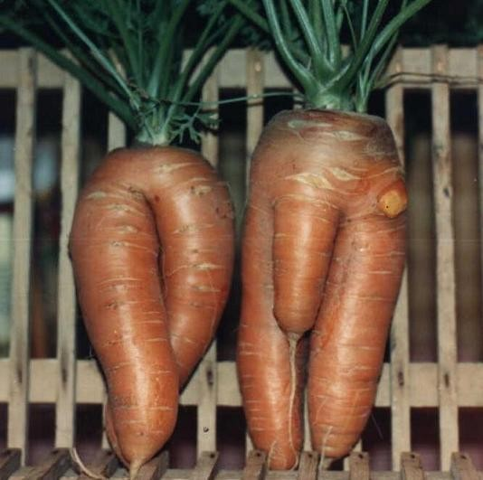 Mother & Father Carrots!