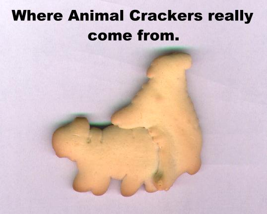 Where do animal crackers really come from?