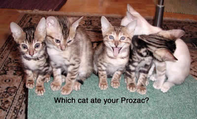 Which cat is on drugs?