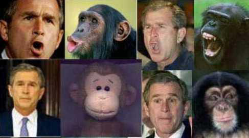 George Bush & Monkeys