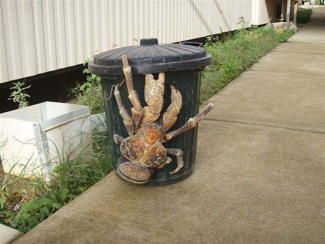 Monster Crab