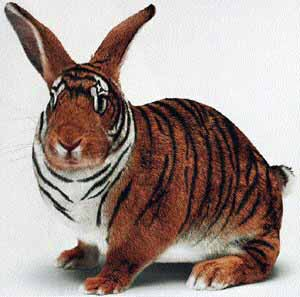 Ever Seen A Tiger combined with a Rabbit?