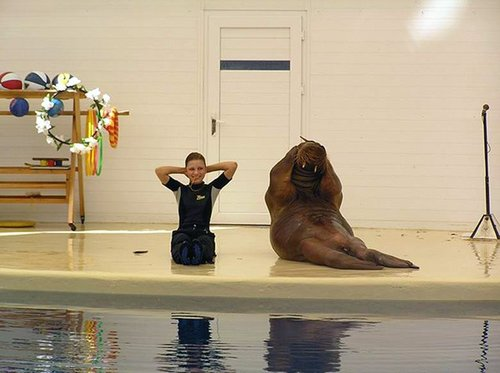 Walrus Workout